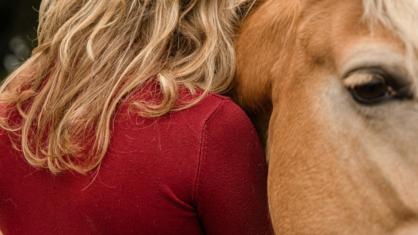 Stress- en burnout coaching met ondersteuning van paarden