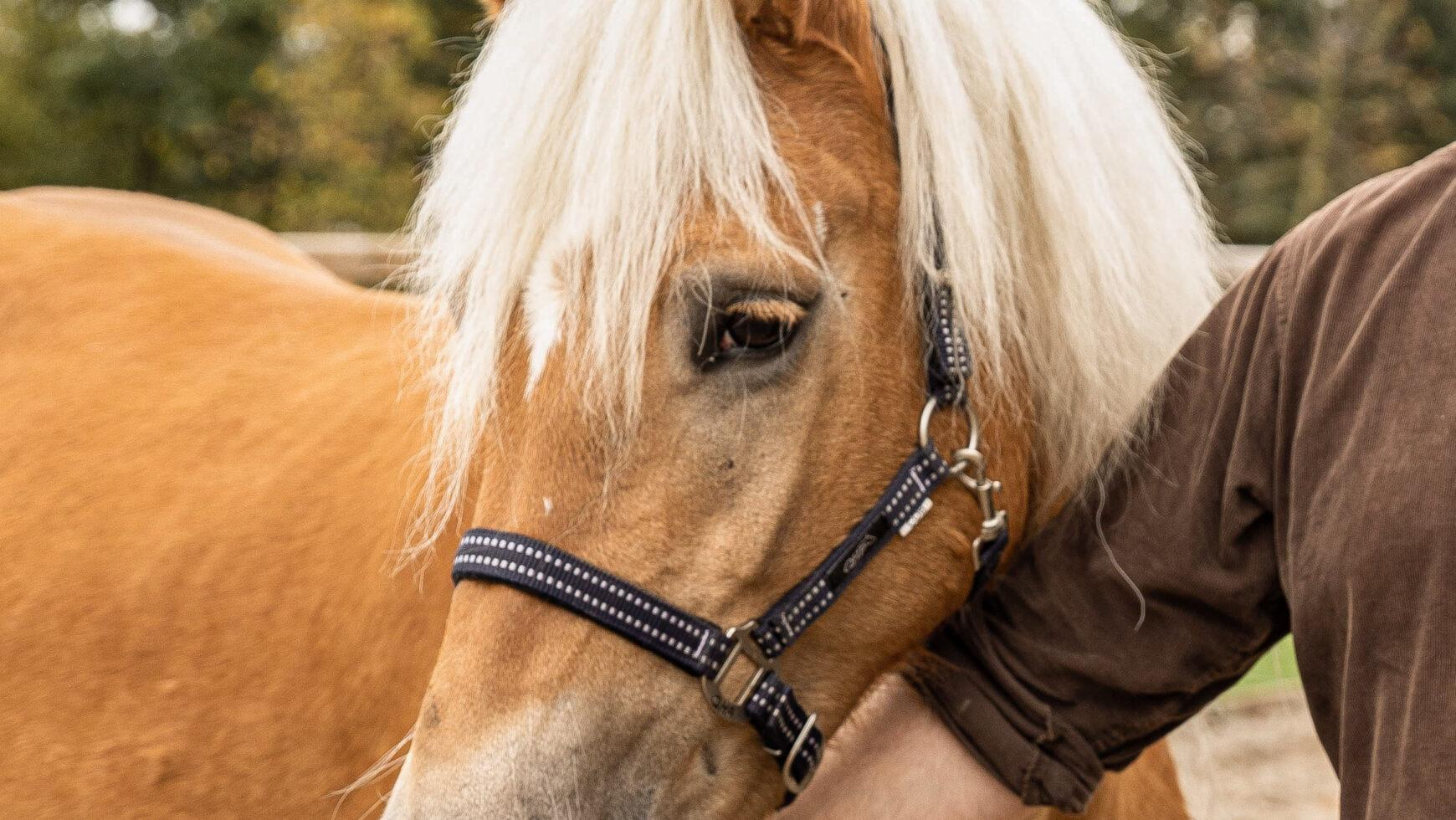 Hoe het is om met een paard gecoacht te worden