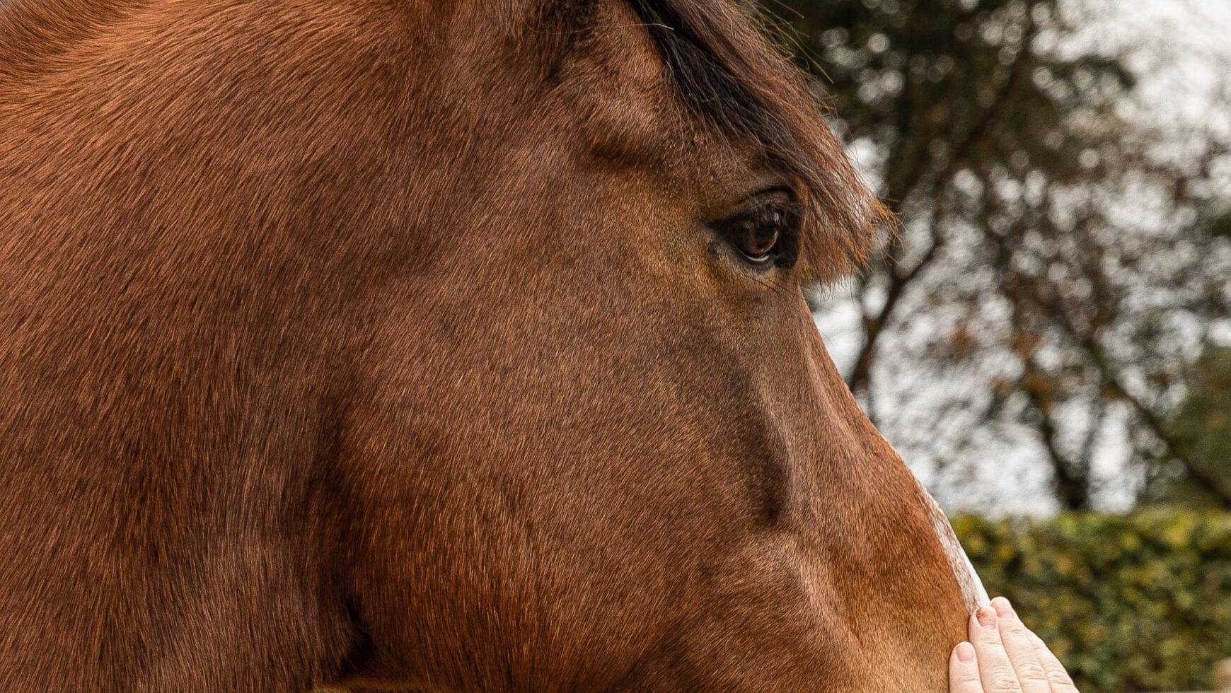 Rust door paardencoaching?
